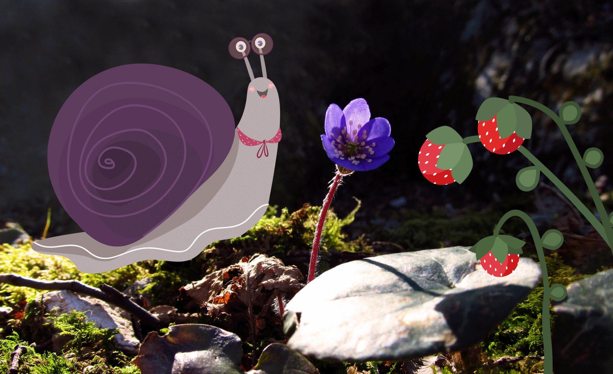 Chiocciola-fragoline-illustrazione-lumaca-foto-illustrata-irene-renon