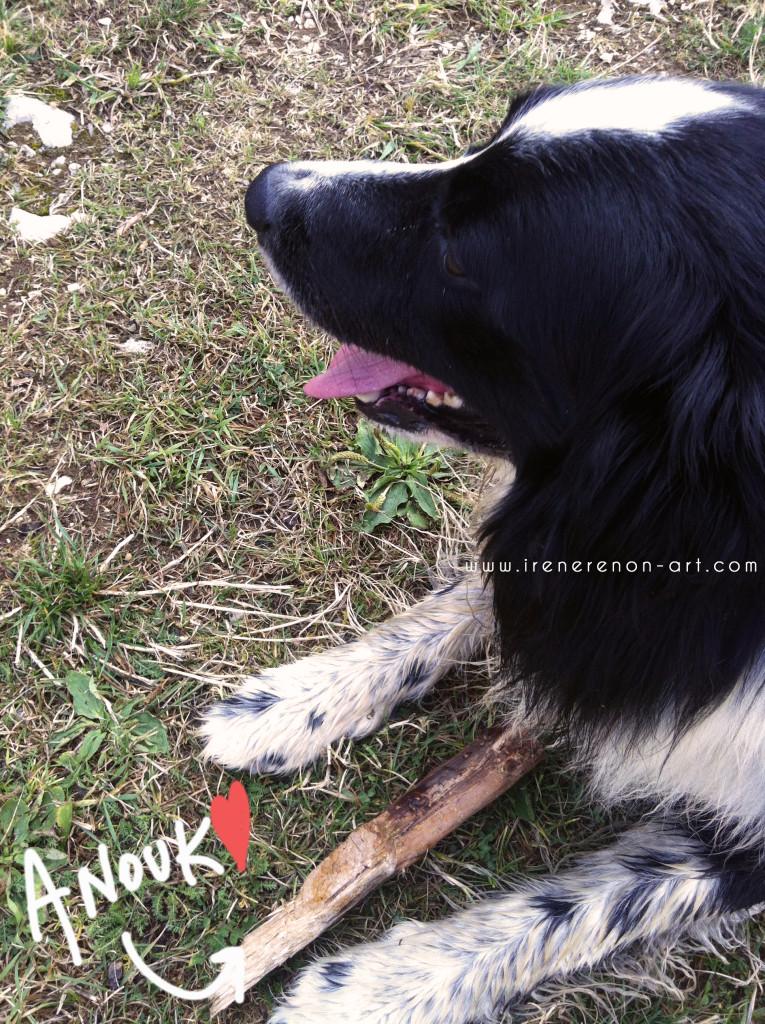 Anouk-cane-malga-campo