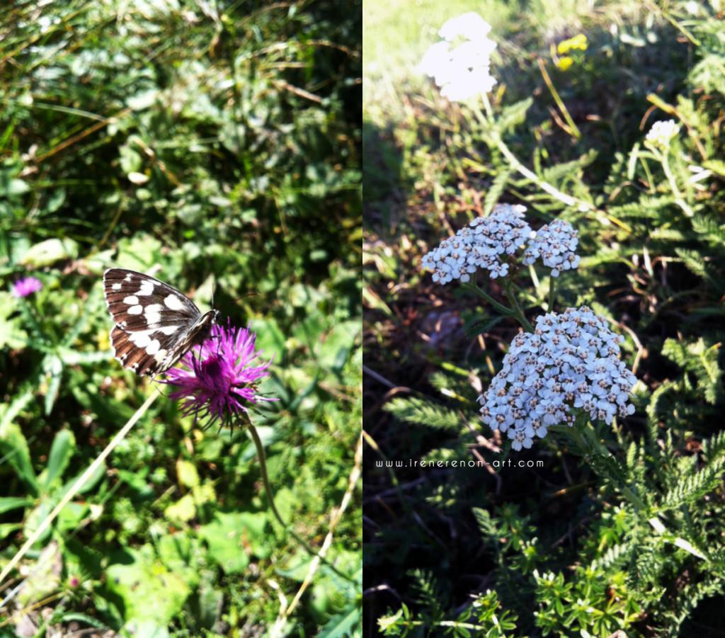 fiori-e-farfalle-montagna-disegnata