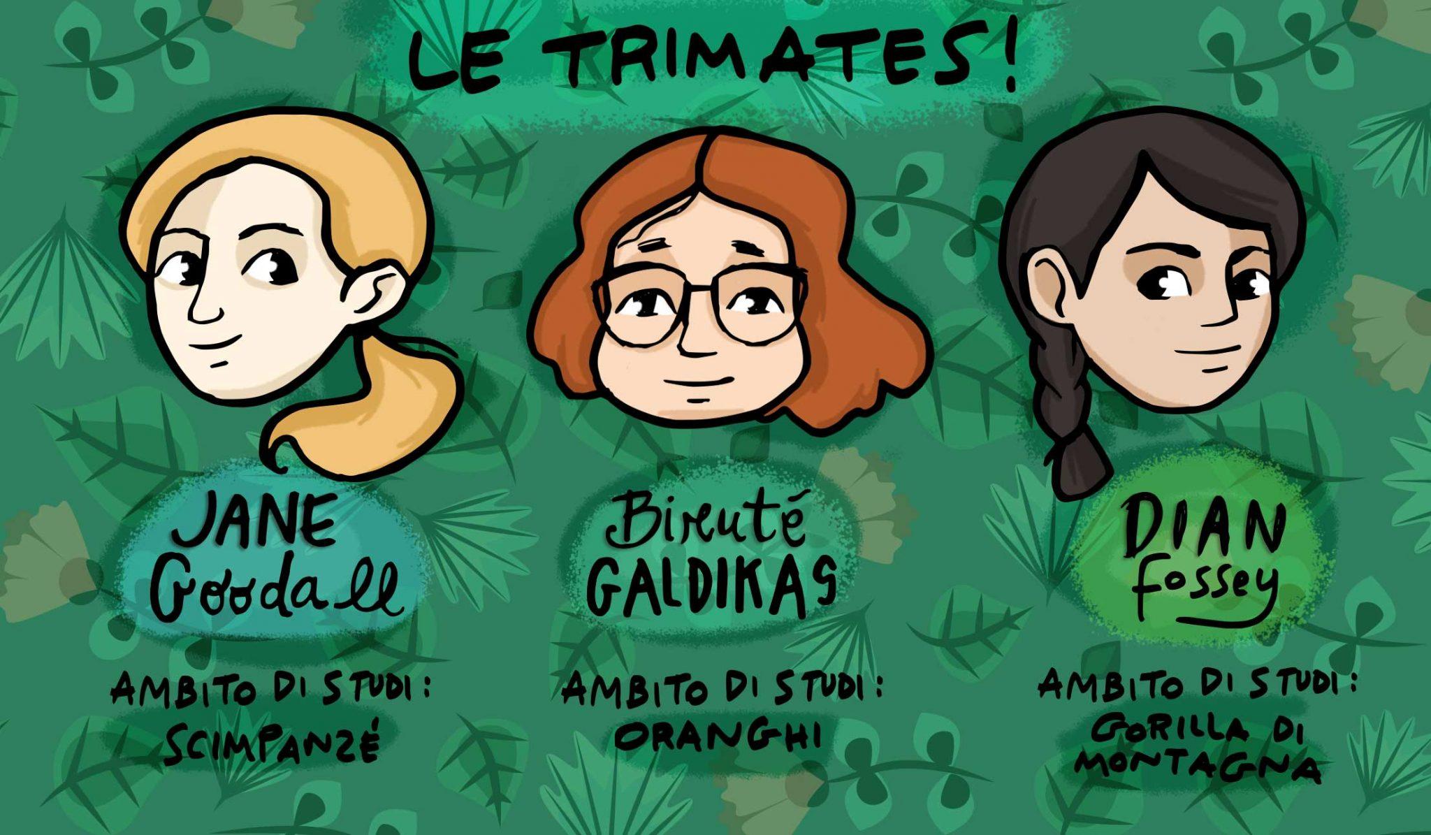 Trimates_illustrazione